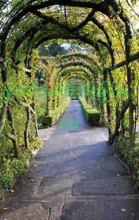 Фотообои Красивая арка