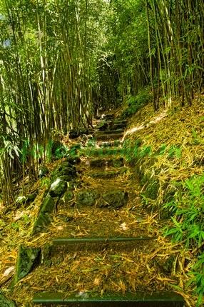 Фотообои Лесенка в бамбуковом лесу