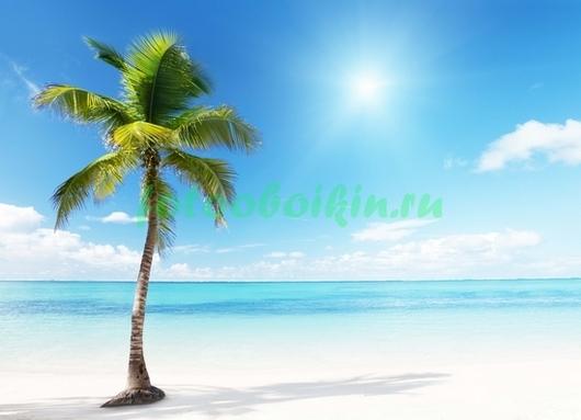Фотообои Одинокая пальма