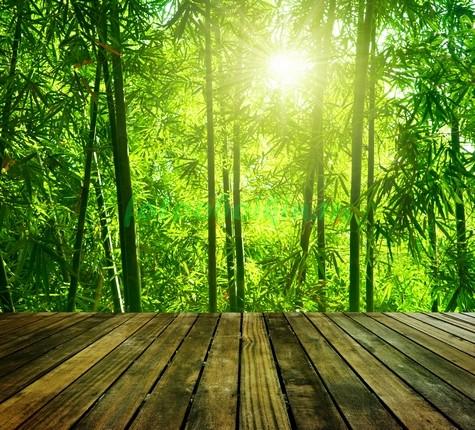 Фотообои Терраса с видом на бамбуковый лес