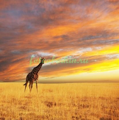 Фотообои Жираф