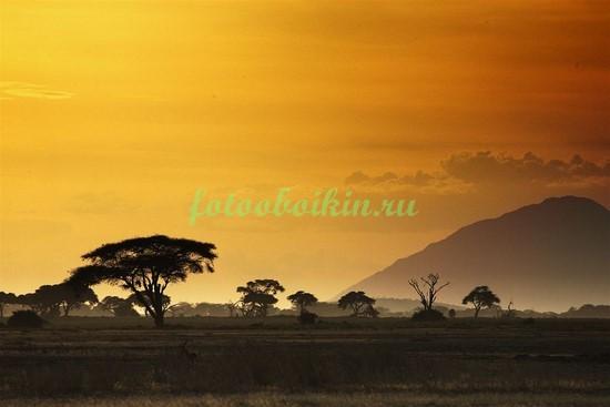Фотообои Африка закат