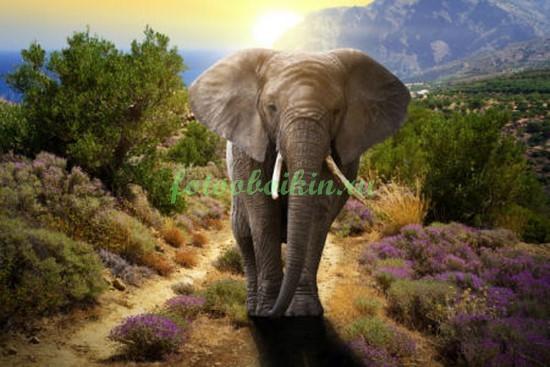 Фотообои Слон на тропинке
