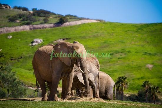 Фотообои Слоны