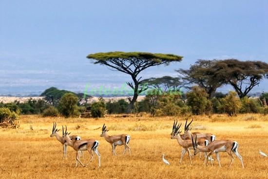 Фотообои Животные Африки