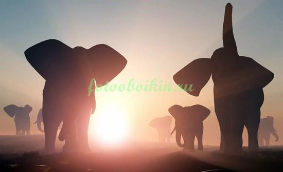 Фотообои Стадо слонов