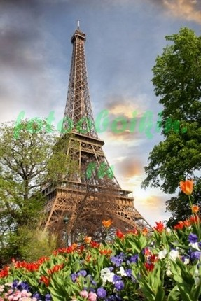 Фотообои Тюльпаны и Эйфелева башня