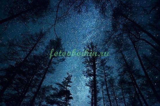Фотообои Звезды в лесу