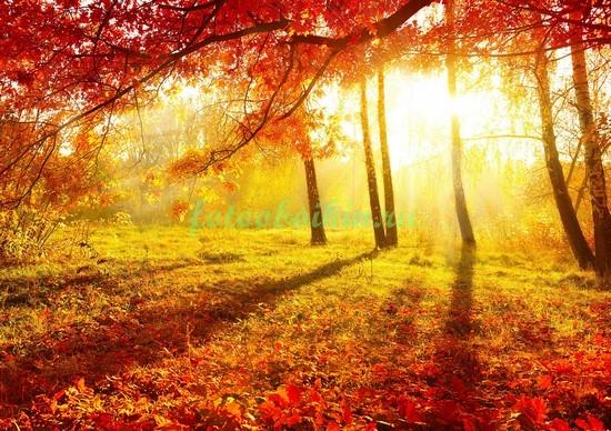 Фотообои Красная осень