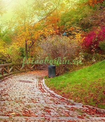 Фотообои Дорога в листьях