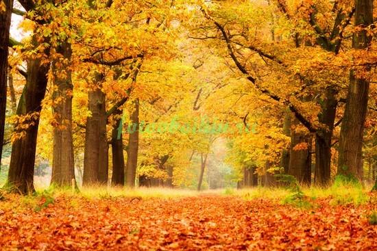 Фотообои Осенний листопад
