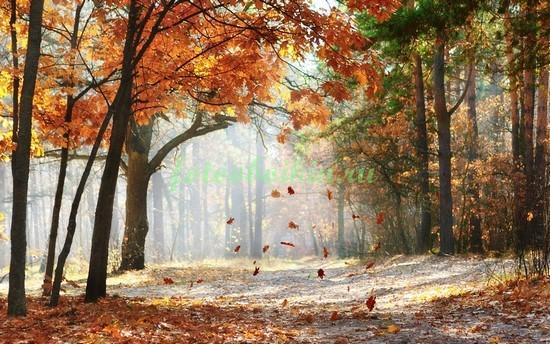 Фотообои Осень в лесу