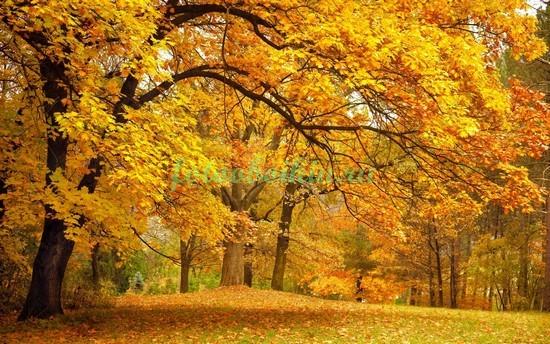 Фотообои Желтая осень