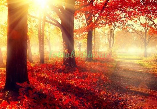 Фотообои Красные листья