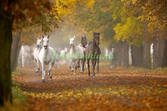 Фотообои Кони в осеннем парке