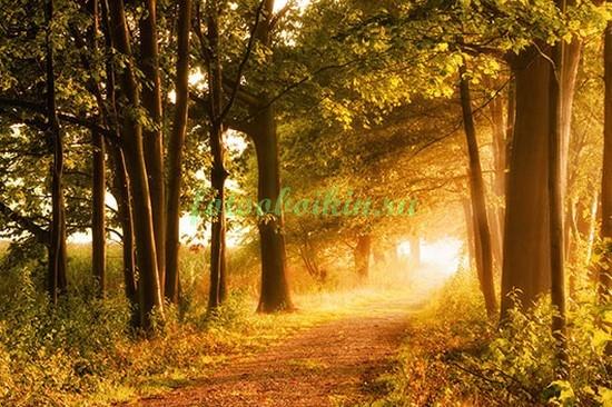 Фотообои Теплая осень