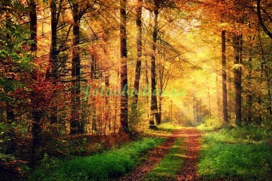 Фотообои Дорожка в лесу
