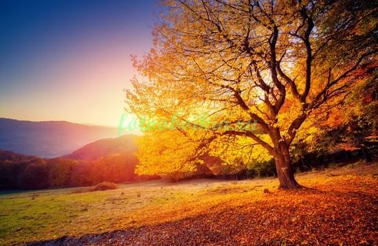 Фотообои Осеннее дерево в поле