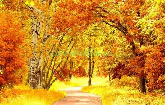Фотообои Яркая осень