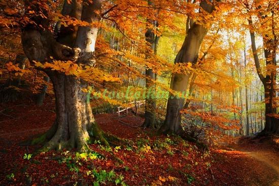 Фотообои Опавшие листья в лесу