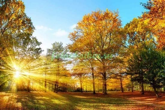 Фотообои Солнце осенью