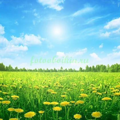 Фотообои Солнце и одуванчики