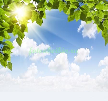 Фотообои Листья березы и лучи солнца