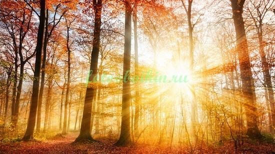 Солнце в осеннем лесу