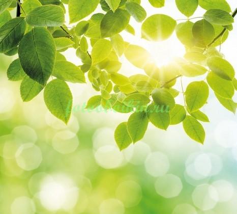 Фотообои Луч солнца в ветках