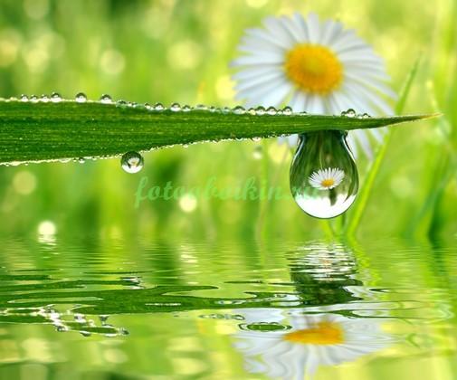 Фотообои Капля отражение