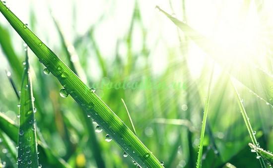 Фотообои Трава