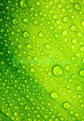 Фотообои Капли на зеленом фоне