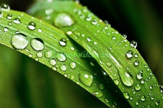 Фотообои Трава после дождя
