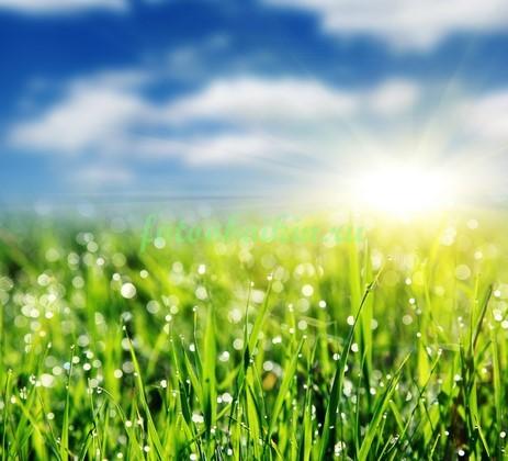 Фотообои Трава в поле