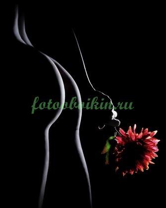 Фотообои Силуэт и красный цветок