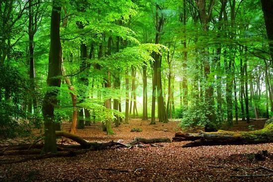 Фотообои Яркий зеленый лес
