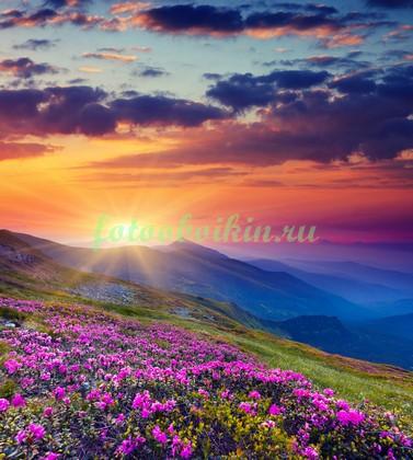 Фотообои Цветы в альпийских горах