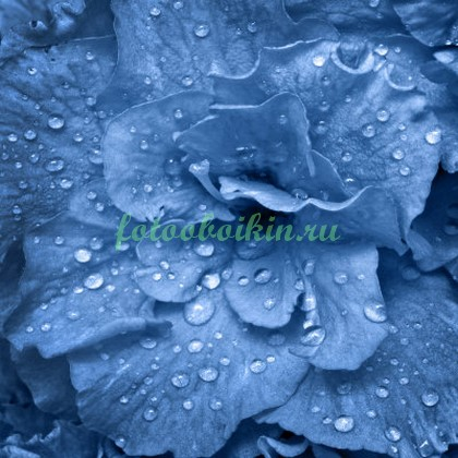 Фотообои Синий цветок с каплями
