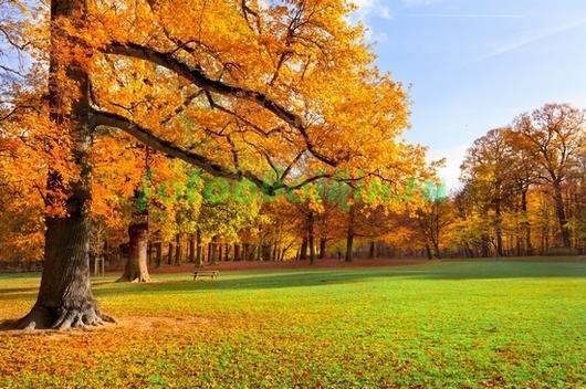 Фотообои Осень в парке