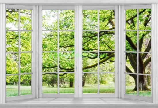 Фотообои Большое окно с видом на парк