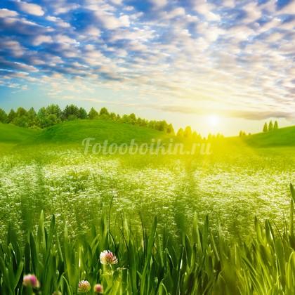 Фотообои Луг с белыми цветами