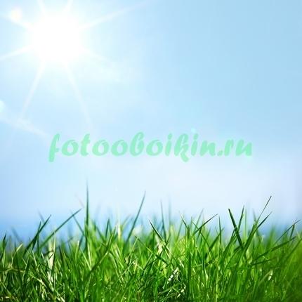 Фотообои Утро в поле