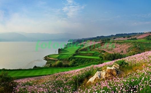 Фотообои Цветущие склоны
