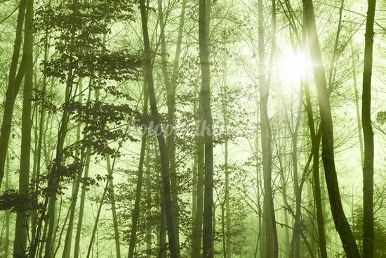 Фотообои Лес стволы деревьев