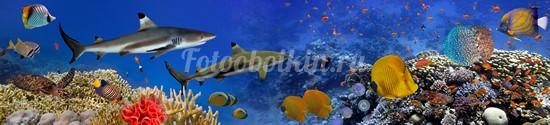Фотообои Панорама с рыбками и акулой