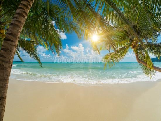 Фотообои Ветки пальмы и солнце