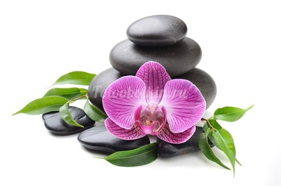 Фотообои Орхидея на белом фоне