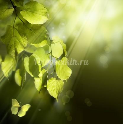 Листья березы на ветке