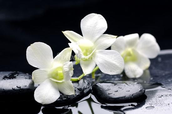 Фотообои Белая орхидея на камнях
