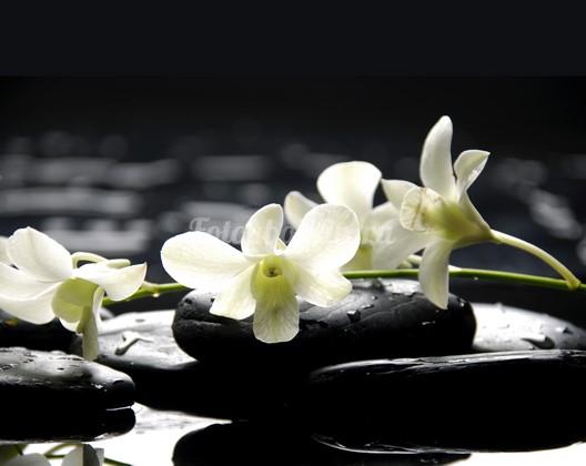 Фотообои Белые орхидеи